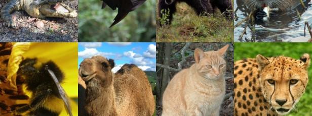 Hayvanlara Eziyet veya Tecavüz Konusuna Kuran Penceresinden Bakarsak..  2.KISIM