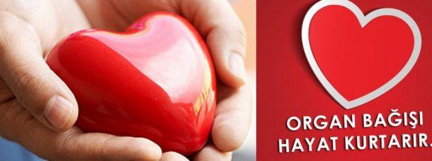 Organ Bağışı Dinen Sakıncalı mı? Kul Kabirde Azap Duyar mı? Allah'ın Diriltme Gücü