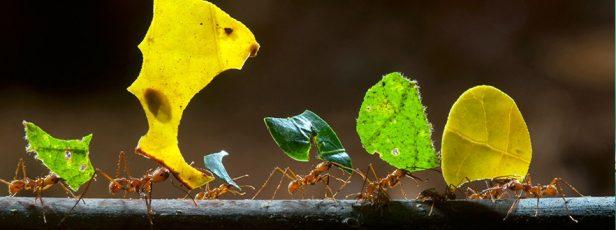 Bizim Karıncalarımız Kimler?